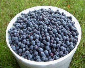 6 motive pentru care sa consumi afine