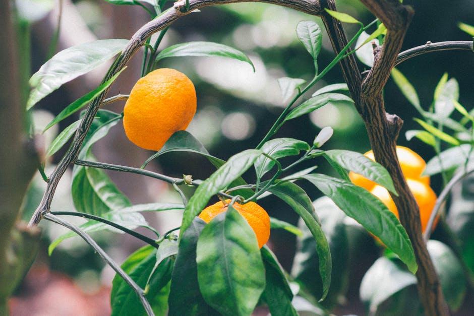 Portocale - Top 5 beneficii pentru sanatate