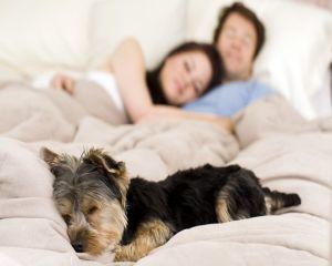 Somnul alaturi de animalul de companie este mult mai odihnitor