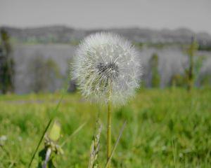 Ce trebuie sa stii despre astmul bronsic