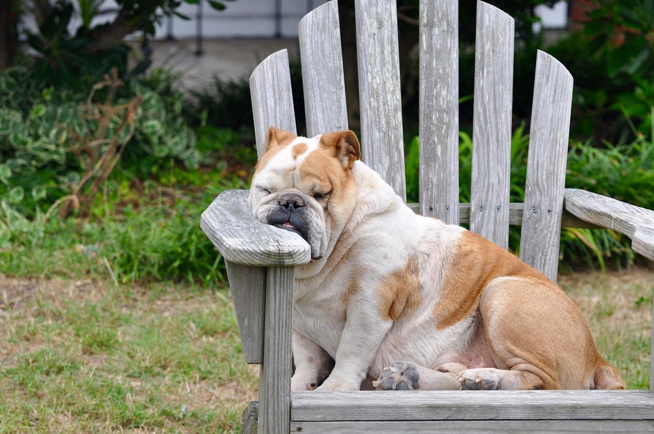 5 motive pentru care te simti obosit tot timpul