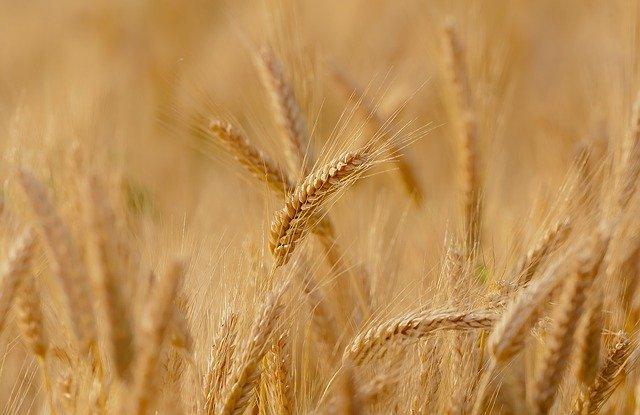 Cum identificati alimentele modificate genetic
