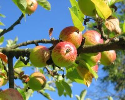 Top 7 alimente care reduc pofta de mancare
