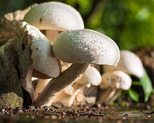 10 motive pentru a manca ciuperci