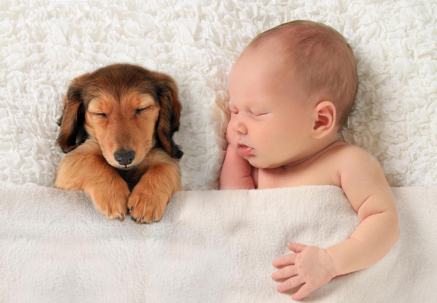 Cum influenteaza cainii starea de sanatate a copiilor mici