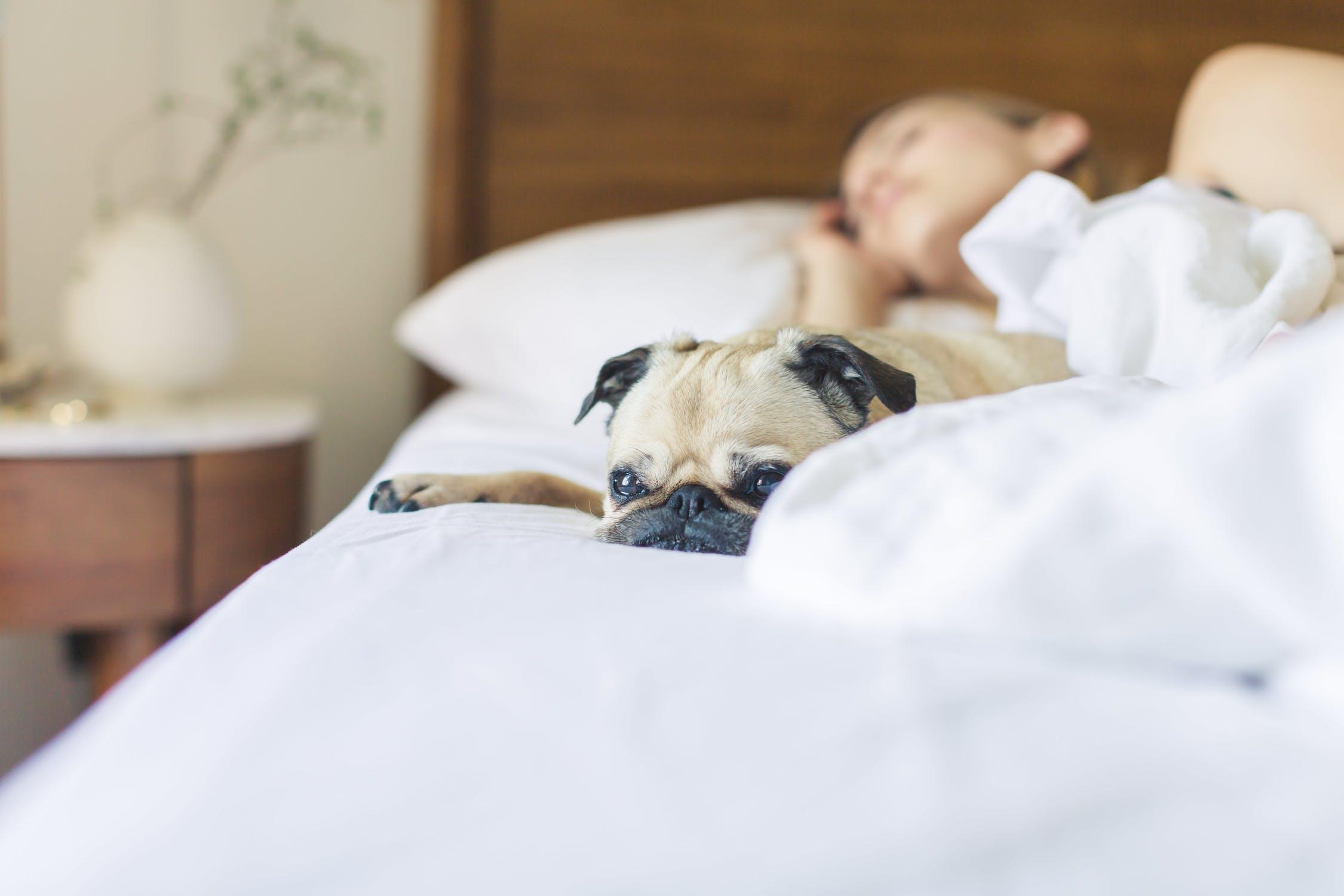 Cum sa dormi mai bine? 5 pasi simpli de urmat!