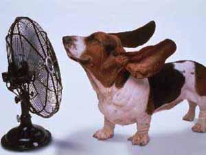 Modalitati de a evita aerul contitionat vara