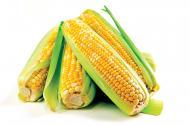 Cate alimente modificate genetic ati consumat astazi?