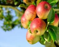 Top 12 fructe si legume care contin cele mai multe pesticide