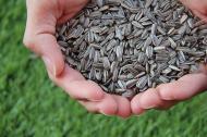 De ce NU este bine sa spargi seminte foarte des
