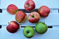 Alimente sanatoase pe care trebuie neaparat sa le incluzi in dieta