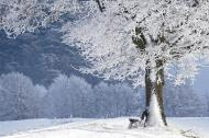 Cum sa iti imbunatatesti digestia iarna