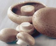 Beneficiile ciupercilor