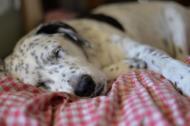5 remedii eficiente pentru tulburarile de somn