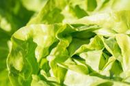 3 motive ca sa mananci salata verde in fiecare zi