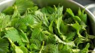 Plantele comestibile din flora spontana: un nesecat izvor de sanatate