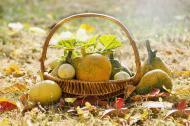Super alimentele recomandate de nutritionisti in aceasta toamna