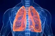 Sistemul respirator si alimentatia